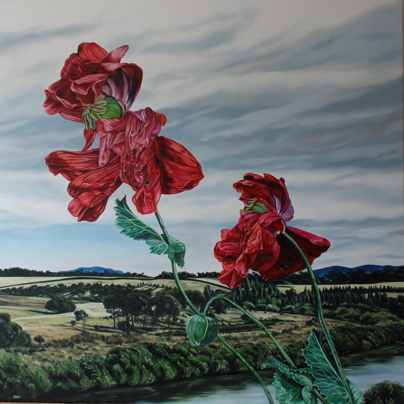 Poppies on the South Esk River